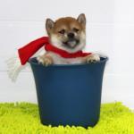 メリ-クリスマス2012 - Joyeux Noël 2012
